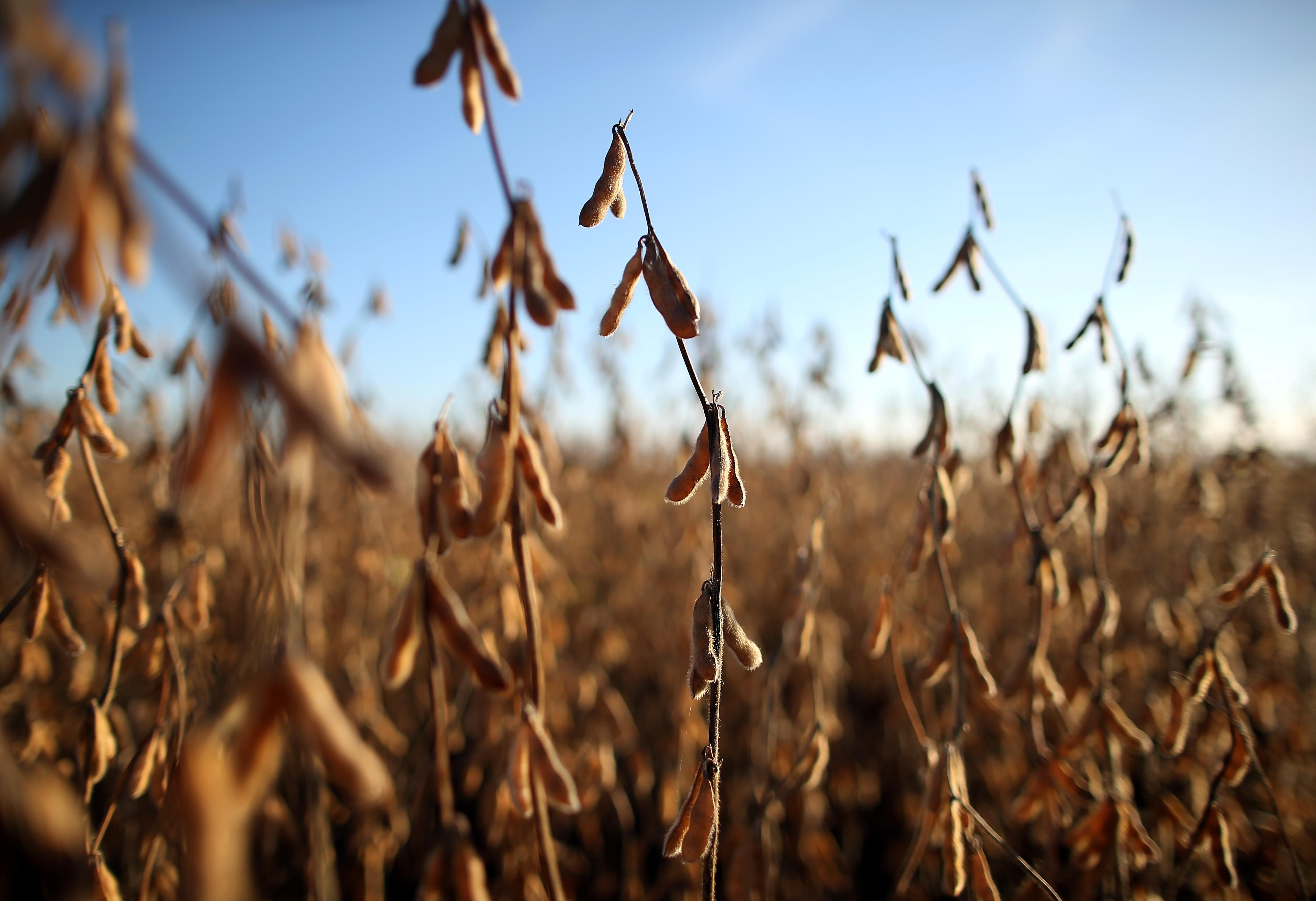 Apesar de safra recorde de soja, país deve fechar ano com menor estoque da história