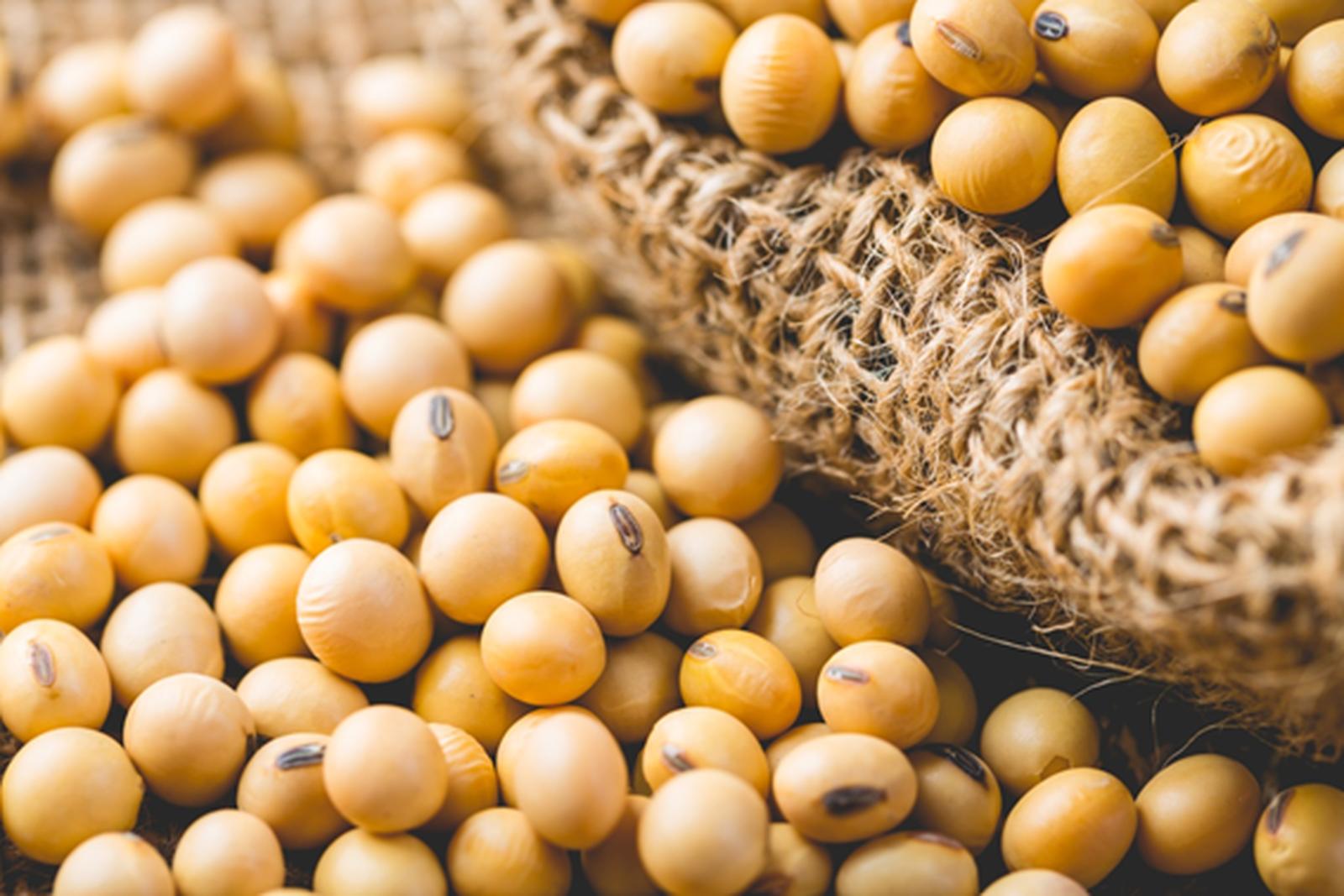 França vai produzir leguminosas para reduzir dependência da soja brasileira