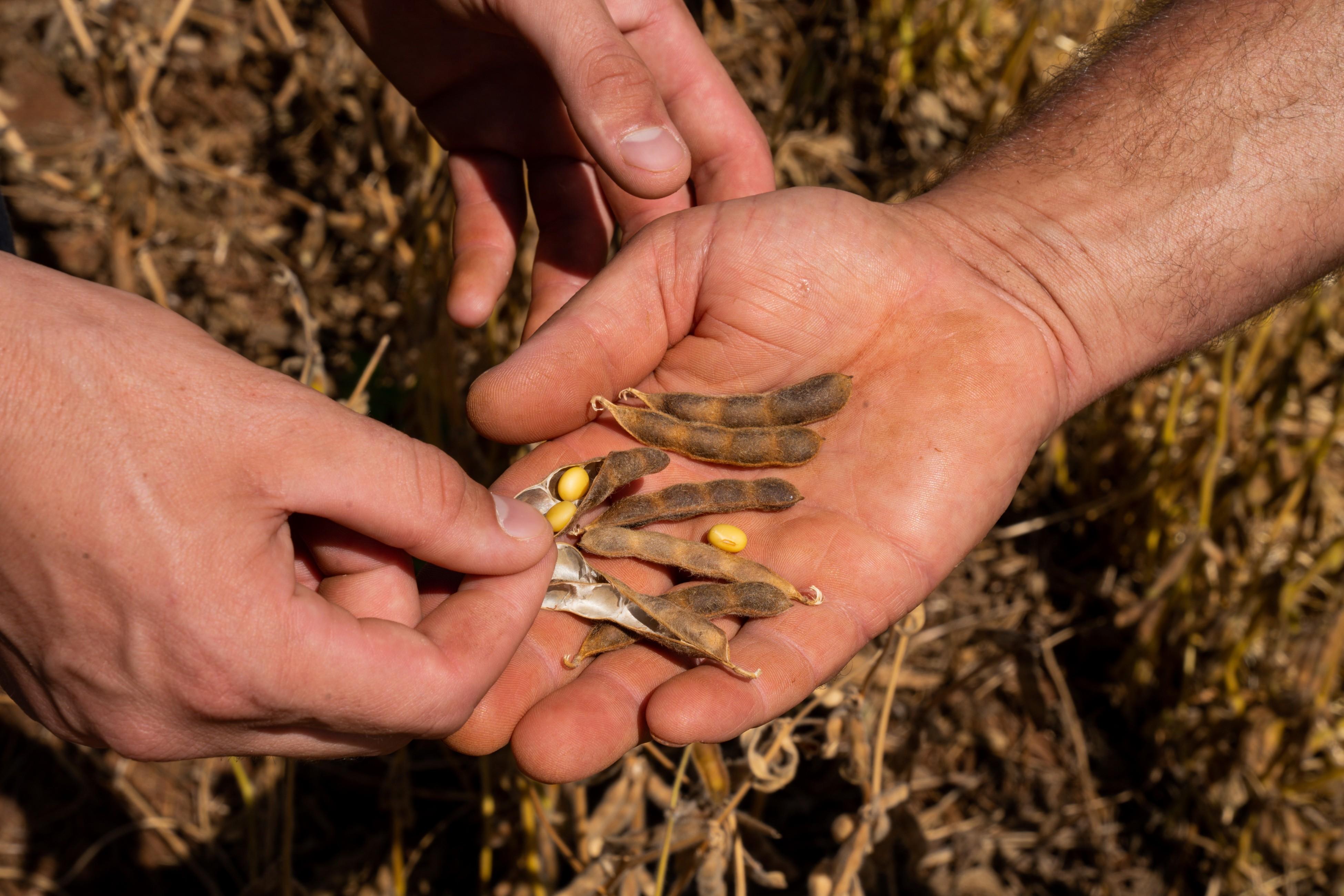 Faturamento da agropecuária tem recorde de R$ 871,3 bilhões em 2020; governo vê alta de 10% para este ano