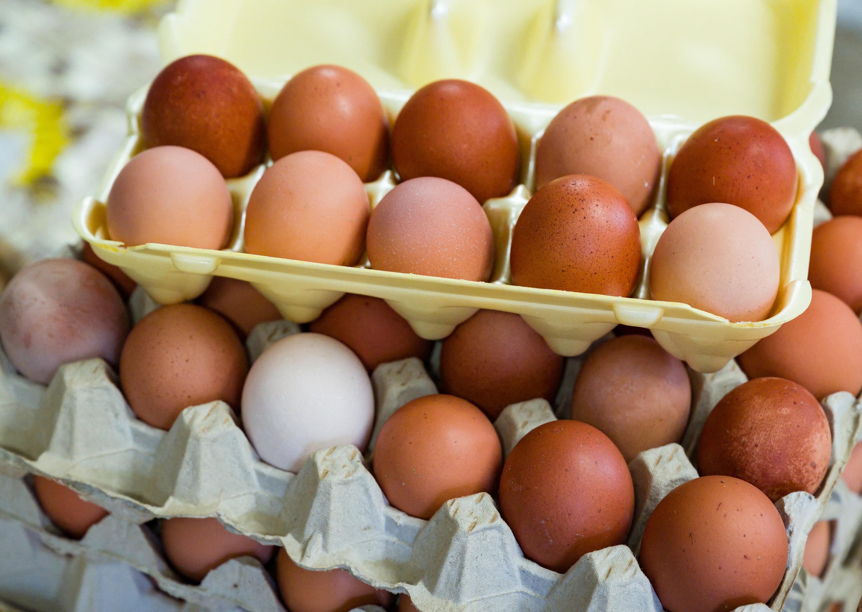 Exportação brasileira de ovos mais que dobra até maio de 2021