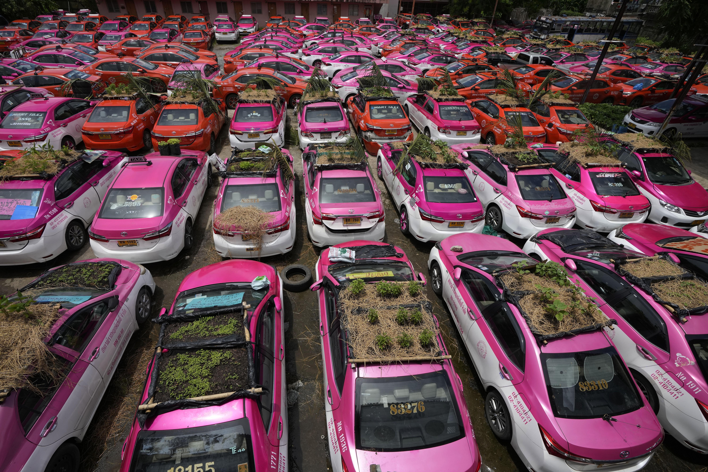 Táxis tailandeses viram hortas após queda na demanda durante pandemia
